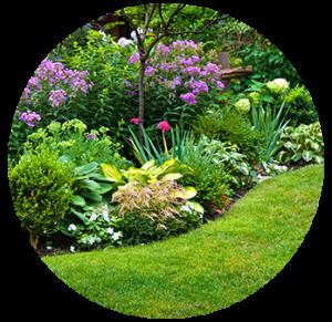 perennial garden border landscape