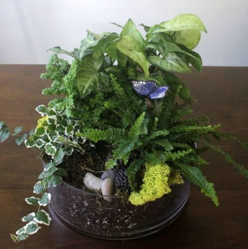 paradise moss terrarium garden