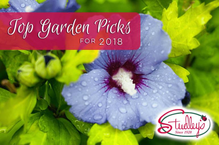 Top Garden Picks For 2018