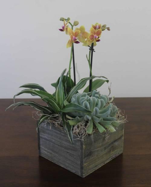 orchid oasis garden